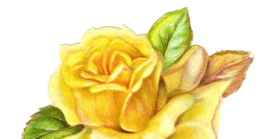 Single Rose Clipart: Antique Images: Free Flower Clip Art: Single Yellow Rose
