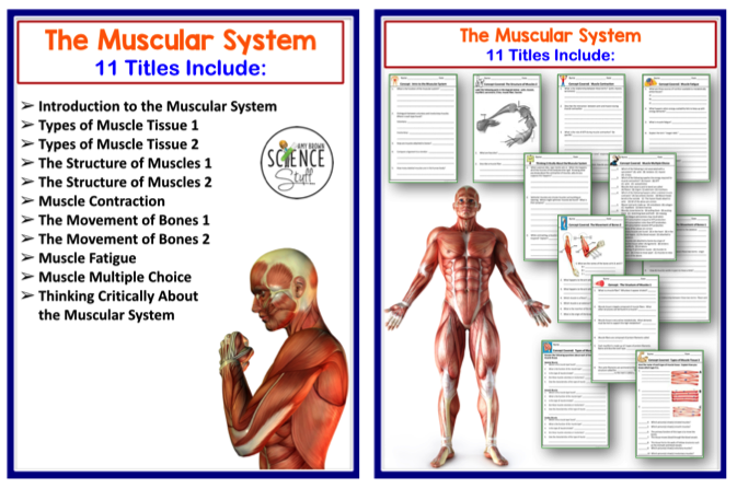 Amy Brown Science: Human Body: The Skeletal, Muscular and ...