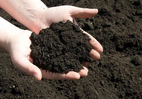 Đất trồng rau sạch