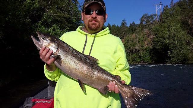 Rogue River, Umpqua River, Chetco River,  Coquille River, Kenai River, Kasilof River, Pacific Ocean, Oregon, Oregon Coast, Oregon Salmon Fishing, California Salmon, Fishing, Fishing Guide, Oregon Fishing Guide, Steelhead Fishing, Oregon Steelhead, Rogue River Sport Fishing, Fishing Adventure, Fly fishing oregon, travel oregon, Guide service in oregon, Fishing charter, drift boat, Elk River, Sixes River, Chrome Steelhead, Springers, Chinook Salmon, King Salmon, Coho Salmon, Silver Salmon, Rogue Bay, Coos Bay, 101 Hwy, Crater Lake, Medford OR, Brookings OR, Gold Beach OR, Shady Cove OR, Roseburg OR, Port Orford OR, Travel Oregon, West Coast Salmon, Rogue River Fishing, Fishing on the Rogue, Oregon Rogue River, Fishing the Chetco, Vacation in Oregon, Visit Oregon, River Fishing, Oregon Steelhead Guides, Oregon Salmon Fishing, Pro-Cure, Pautzke, YBC,  Phil Tripp, Phil Tripp's Guide Service, Rogue River Sport Fishing, 2010, 2011, 2012, 2013, 2014, 2015, 2016, 2017, Rogue River Canyon, Willie Boats, Central Point OR, Wild River Boat & Trailer, Eat Fish, Catching Fish,