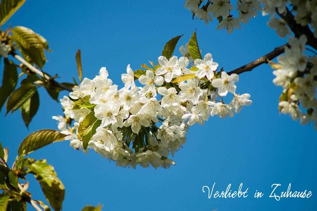 Fotoprojekt 2in1 Mai: Bildbearbeitung mit Photoscape mit Kirschblüten und Möwen Photoblend