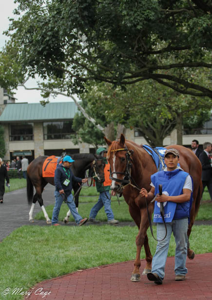 Fall Stars Weekend At Keeneland A Photo Essay Horse