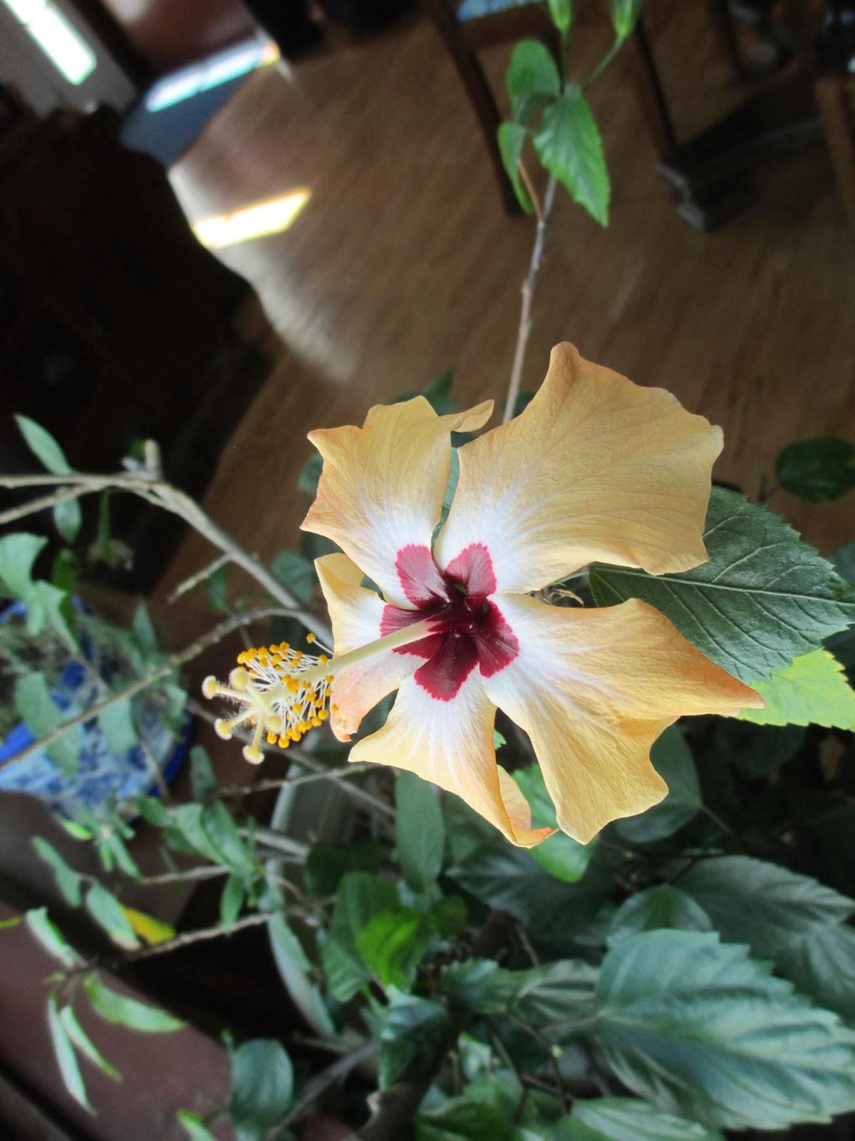 Garden Fancy: Fertilizer Friday: February 21