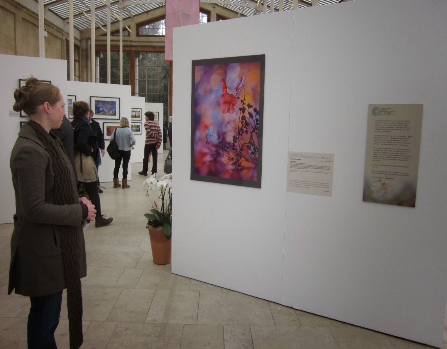 Admiring the IGPOTY winning photograph in the Nash Conservatory at Kew