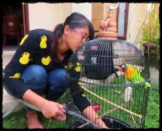merawat burung yang baik dan benar