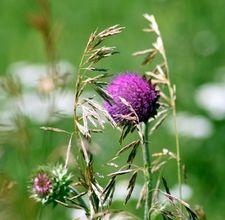 herbicida casero
