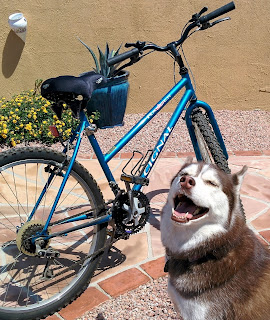 A Bike Leash for dogs helps you ride a bicycle with your dog safely.  #dogs #petsafety #bikewithdogs