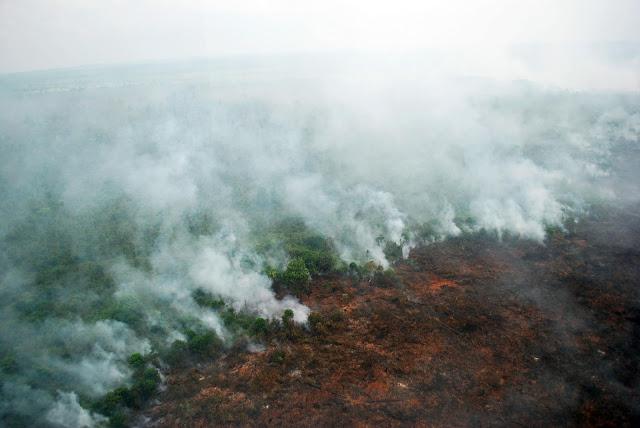 Gubernur Riau Tetapkan Status Siaga Darurat Karhutla Hingga Oktober 2019