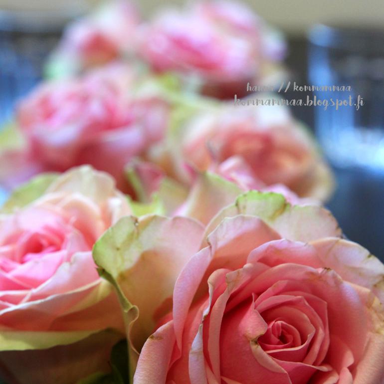 vaaleanpunainen ruusu pinkki
