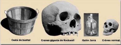 Comparativo de un esqueleto gigante
