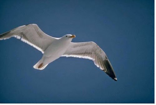 liberté-Image d'oiseau sur le bleu ciel