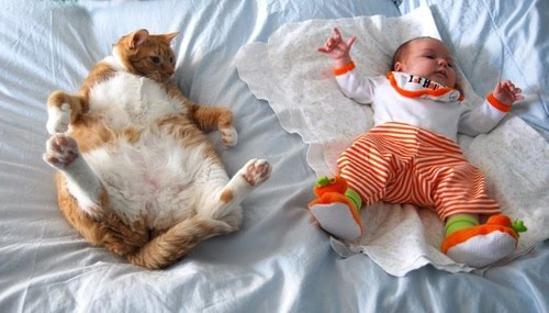 Great Pictures Most Awkward Cat Sleeping Positions