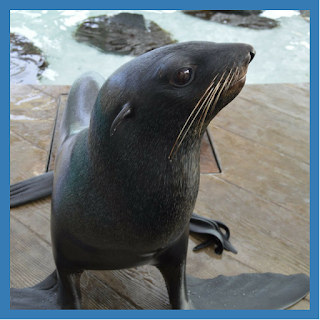 Meet the Fur Seals! | April 9, 2018