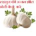 लहसुन की उन्नत शील खेती कैसे करे -How to cultivate Garlic's advanced cultivation