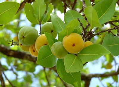 OS 10 benefícios do uvaia para saúde