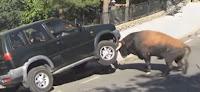 Toro ataca una familia