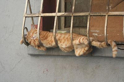 chat roux marrant