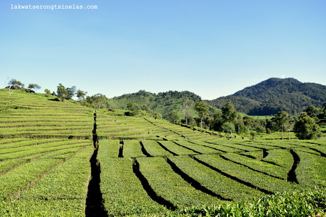 KAWAH PUTIH AND A TEA PLANTATION SIDETRIP