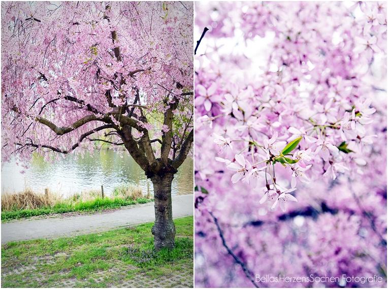 Baum rosa Frühling