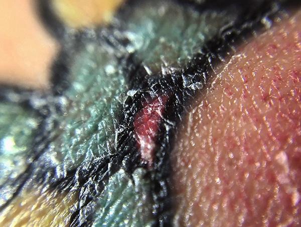 Cuidados Después De Tatuarse Belagoria La Web De Los Tatuajes