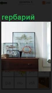На столе под стеклом сделан гербарий из различных растений разной величины