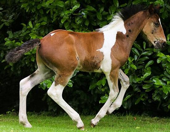 Picasso - o cavalo com um cavalo nas costas