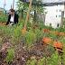 Resort mantêm horta própria para oferecer orgânicos aos clientes