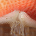 Starfish Can See You … with Their Arm-Eyes