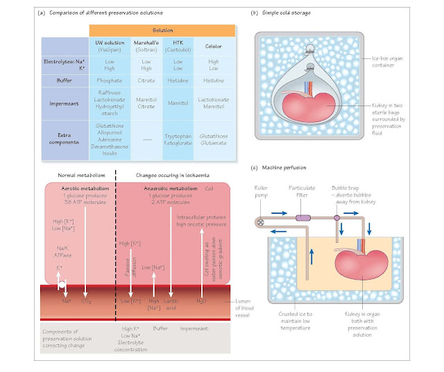 Organ Preservation, The effects of ischaemia, Cooling, Electrolytes, Impermeants, Buffer, Additional reagents, Static storage or machine perfusion