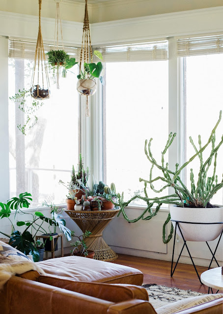 plantas colgantes en la sala,