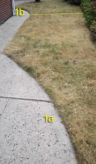 Lawn 1a one week after spraying with Nature's Avenger