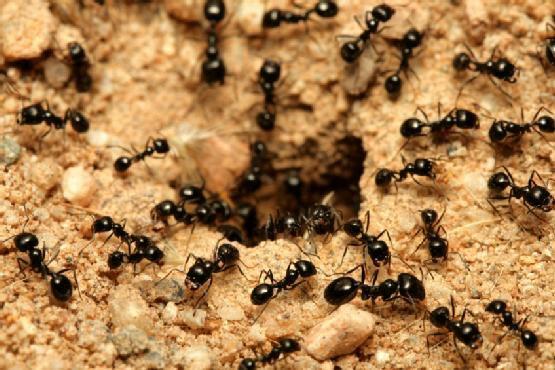 هل تعلم ان النمل