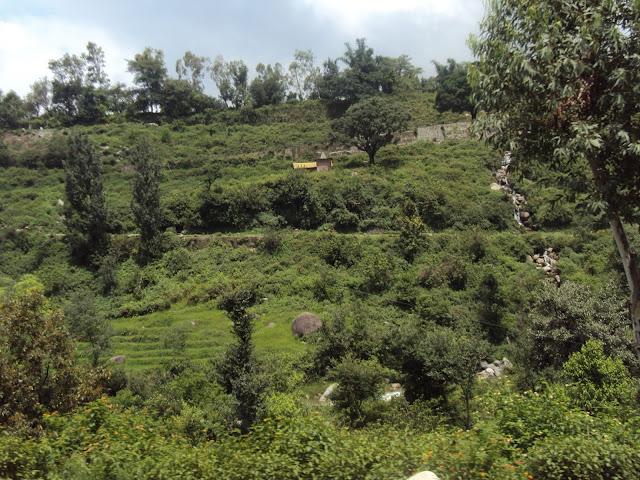 dharmshala to palampur