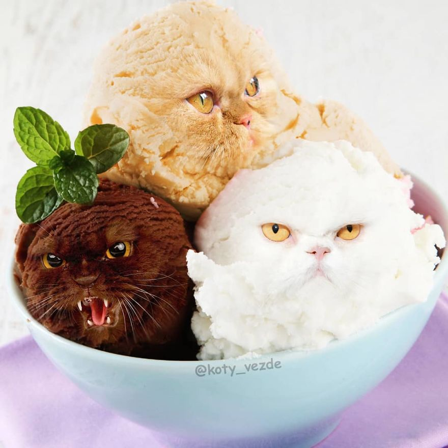 Hilariously Disturbing Pictures Show What Everything Would Look Like If It Had A Cat's Face