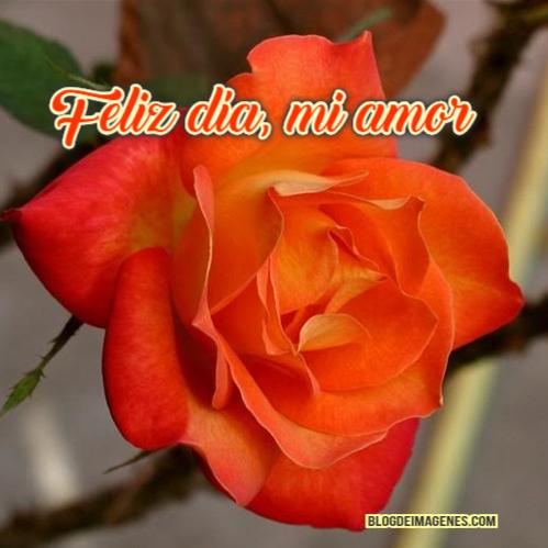 rosa día del amor