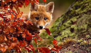 30+ En Güzel Hayvan Resimleri