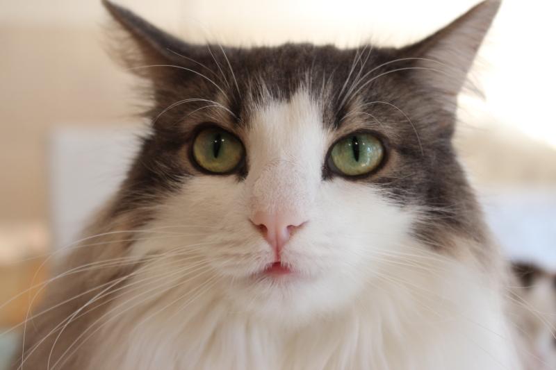 【地域猫活動 東京都のガイドライン】 地域猫活動をどのように行っていく...  野良猫餌付け(地