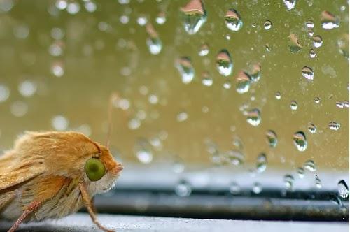 صور جميلة للمطر فى فصل winter-rain+(10).jpg