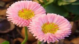 cara membuat bunga dari sedotan plastik, cara membuat bunga mawar dari sedotan, langkah langkah membuat bunga dari sedotan, membuat bunga dari sedotan yang mudah,