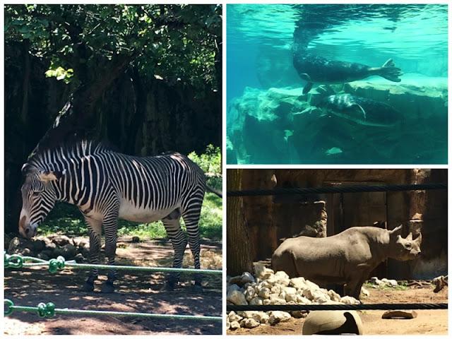 zebra sea lion rhino at lincoln park zoo