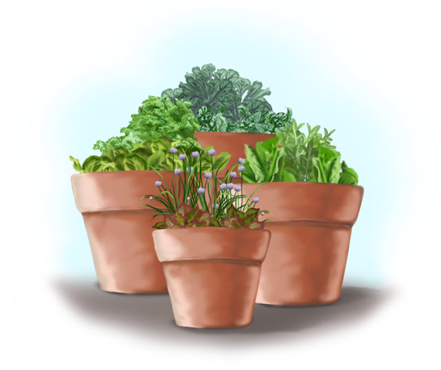 Bonnie Plants salad garden in containers