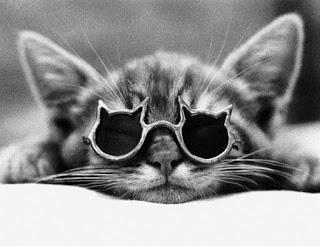Foto Gambar Kucing Lucu Pakai Kacamata Hitam