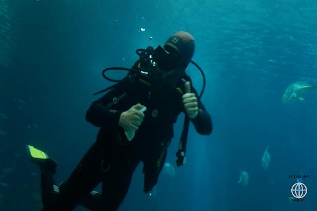 NUREK LISBOA OCEANARIUM