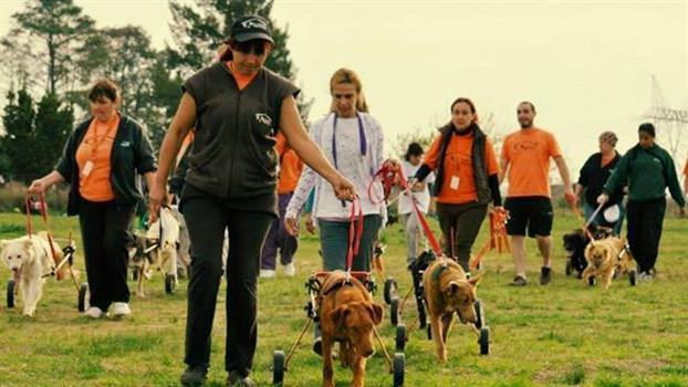 Un refugio para perros cuya labor te conmoverá