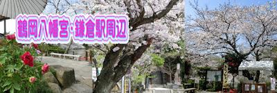鶴岡八幡宮・鎌倉駅周辺の桜