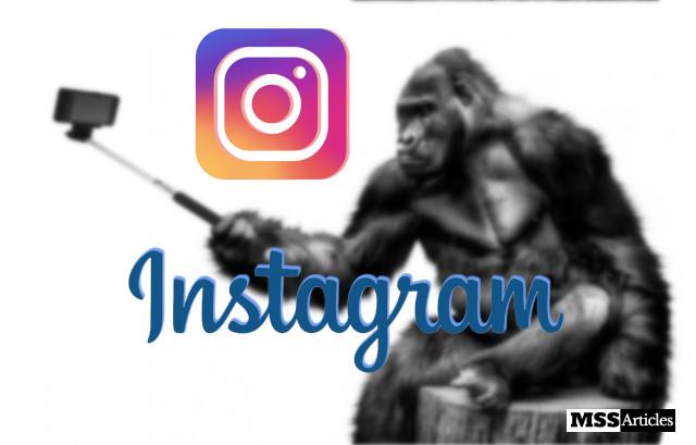 Gorilla holding selfie stick o take a selfie.