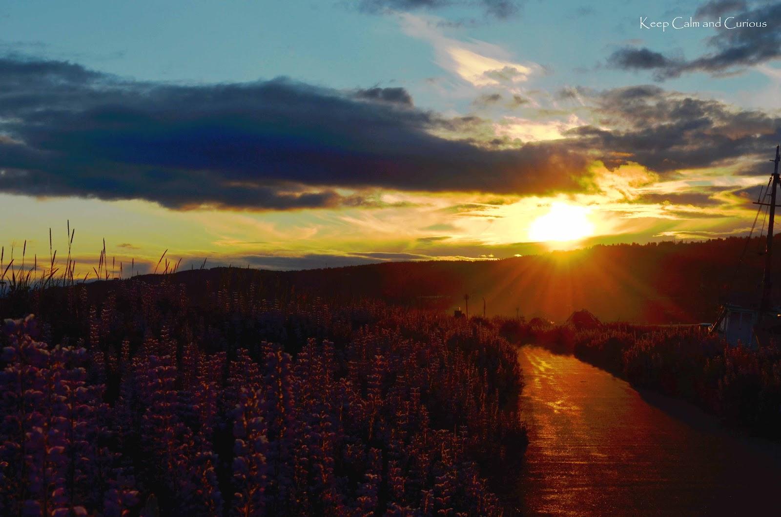 Land Midnight Sun Alaska