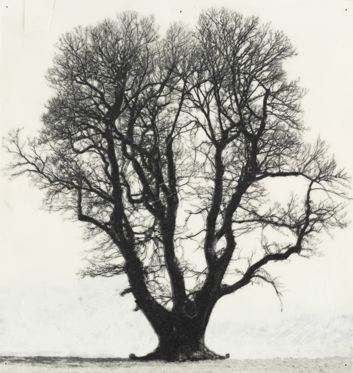 A Sound Awareness: Drawings Of Old Trees