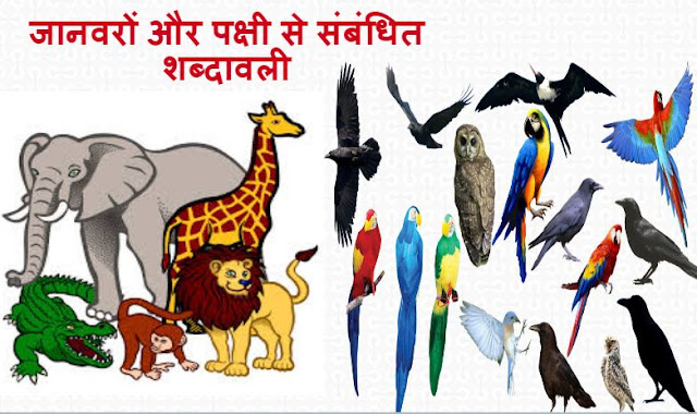 जानवरों और पक्षी से  संबंधित शब्दावली -  Animals And Birds Related Terminology