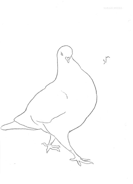 art, drawing, arte, pigeon, dove, sarah, myers, bird, sketch, minimal, line, contemporary, simple, modern, animal, charcoal, line-drawing, strutting